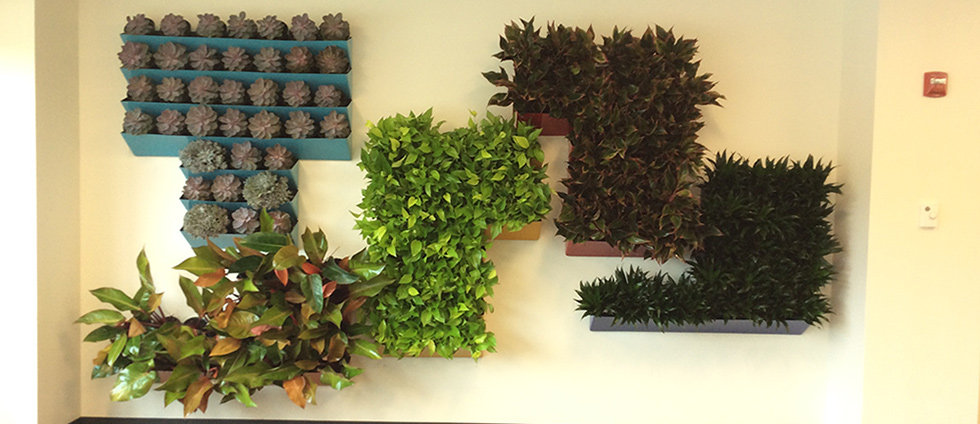 Living Wall by Metro Tropical Plant